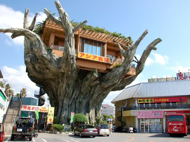 okinawan treehouse