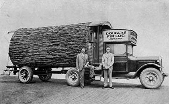 tree truck camper