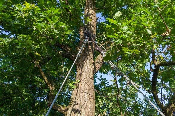 tree-anchors